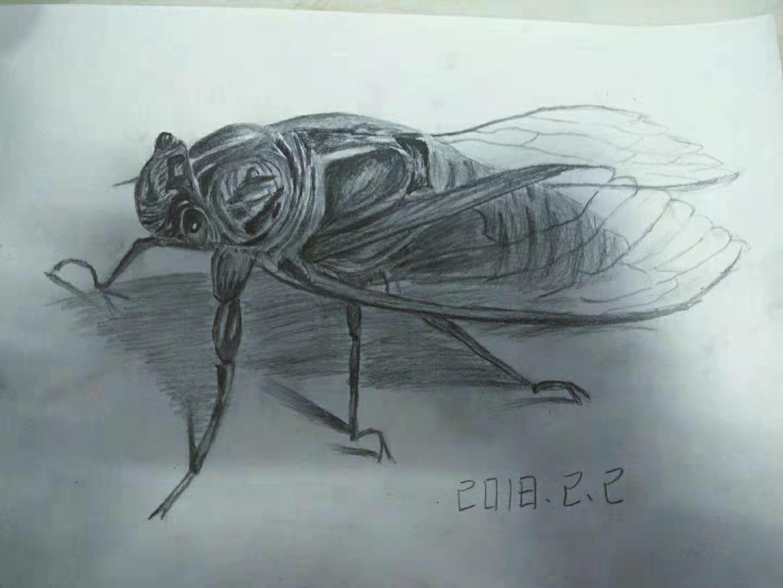 手绘一只蝉